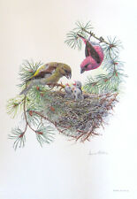 CROSSBILL With Young Bird Print, 100 Cotton Paper Signed in Pencil by James Alde