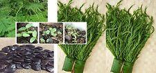 40 Seeds Thai Cha-om Acacia,Senegalia Pennata from my garden