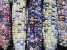 GLASS GEM CORN SEEDS - FRESH - HEIRLOOM - 40 SEEDS - BEAUTIFUL QUALITY