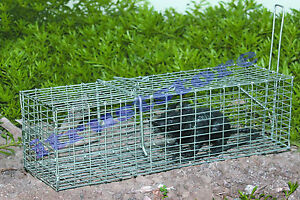 CAT LIVE CATCH AND RELEASE ANIMAL TRAP TRAPPER WILD RACCOON RABBIT PEST