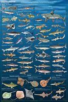 Sharks & Kin Sealife Mammals Educational Science Classroom Chart Poster 24x36