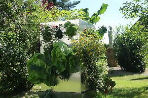 Hochbeet rollbar Alu Pflanzturm Beet raumwunder Blumentopf stabil rostfrei