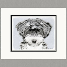 Tibetan Terrier Puppy Dog Original Art Print 8x10 Matted to 11x14