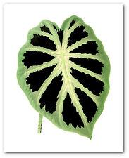 Tropical Leaf Print, Botanique Alocasia Art, 8 x 10 pouces, non encadrés
