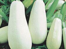 Seeds vegetable squash Zucchini White-fetal. Bush organic from Ukraine