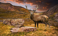 STUNNING SCOTTISH STAG LANDSCAPE CANVAS #5 WILDLIFE PICTURE A1 SIZE WALL ART