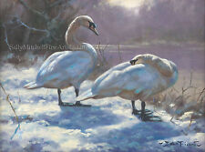 Swans in The Snow Christmas Cards Pack of 10 by John Trickett C491x