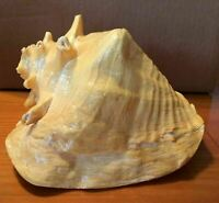 Large Conch Sea Shell Ocean Beach Seashell Decoration Nautical Home Accent