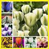 100pcs Colorful Tulip Seeds Bonsai Perennial Flower Seeds Home Garden Plants