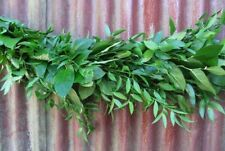 Italian Ruscus and Salal Garland / 10 ft section / Wholesale / Grower Direct