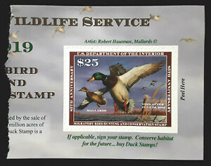 US Duck Stamp 2018 $25 Mallards Scott # RW85A MINT NH