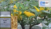 100g Extrait Fo Shou (Fruit Citron Doigt) / Main de Bouddha 1:7