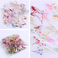 10pcs/set 3D Nail Art Decoration Dried Babysbreath Pretty Preserved Flower DIY