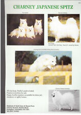 Japanese Spitz breed kennel clippings utility breed x 50 dog crufts lot 2