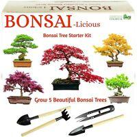 Bonsai Tree Kit, Grow Your OWN Bonsai Trees from Seeds + BONSAI TOOL SET + BONUS