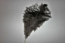 25 natural black drabs ostrich feathers first grade 180-200MM (7-8 inch) undyed
