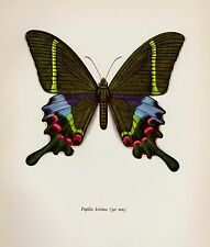 Vintage BUTTERFLY Print Beautiful Butterfly Wall Art PEACOCK SWALLOWTAIL 2554
