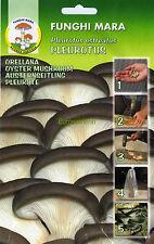 1 Conf. CHIODI DI MICELIO - Pleurotus