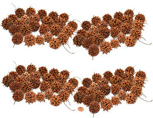 Muwse 100 Stk. Amberbaum Zapfen Natur trocken Mini-Zapfen Deko Floristik Basteln