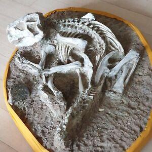 Complete rare real dinosaur skeleton Psittacosaurus fossil 65cm