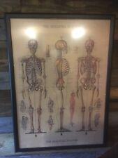 Framed Human Body Anatomy Skeleton Art Print Canvas Poster