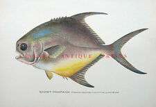 PERMIT SHORT POMPANO ~ 1906 Sherman Denton Saltwater Game Fisherman Art Print