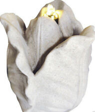 Zimmerbrunnen Tulpe
