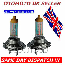 H7 (499) rainbow all weather bulbs 55w 12v for Audi, Bmw, VW and Peugeot