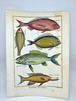 Fish 1750-80 Nice Hand Colored Prints by Diderot and Prevost 2 Engravings