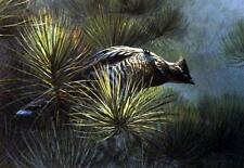 "Don Kloetzke Jack Pine Grouse SN 13"" x 9"""