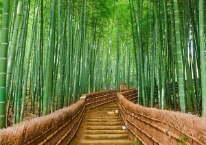 A1  Bamboo Forest Poster Art Print Size 60 x 90cm Tropical Decor Gift #14168