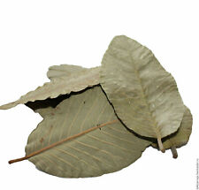 25g fresh Dried Guava Leaves - anti-bacteria Relieve Natural Shrimps food