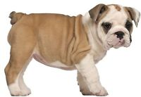 Sticker decal wall fridge children room animal decorate puppy baby dog bulldog