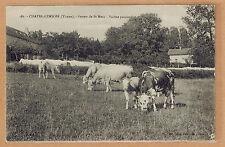 Cpa Chatel Censoir - ferme de St Marc vaches paissant tp0560