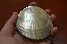 "ROUND BLACK MOTHER OF PEARL LIP SEA SHELL PLATE DECOR 3"" #7390"