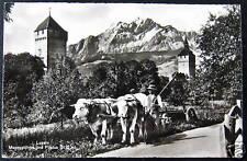 Switzerland~Luzern~Swiss Cows Pulling Cart~ Rppc