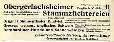 OBERGERLACHSHEIMER STAMMZÜCHTEREIEN  N.- Schlesien Historische Reklame von 1896