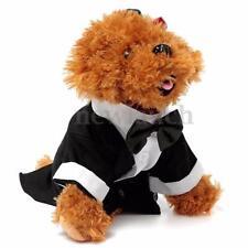 Chemise noire pour chien