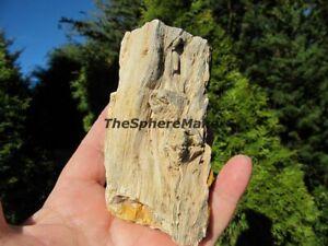 Petrified Wood with Tree Limb Knots Rough Rock Fossil Suiseki Lapidary 11.3 oz