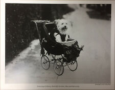 PRINT: WEST HIGHLAND WHITE TERRIER DOG IN CARRIAGE, JESSIE TARBOX BEALS 1907