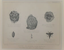 1890 Antiguo impresión Caballo Anatomía-Abdominal vísceras riñones Litografía Original
