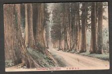 unmailed post card Cryptomeria Road Nikko Japan