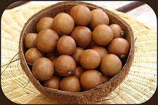 MACADAMIA NUT SEEDS 20 SEEDS/NUTS