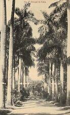 Near Havana,Cuba,Paisaje de Cuba,Palm Tree Lane,c.1909