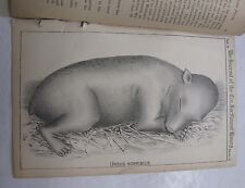 Cincinnati Society Natural History Young Grizzly Baby Bear Lithograph Ursus1878