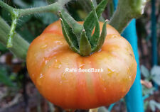 Yellow-Red Stripped Tomato - A Large Tomato with Amazing Colours - 10 Seeds!!!