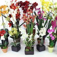100 Pcs Orchid Flower Seeds, 9 Species of Rare Colorful Plant Bonsai Home Garden