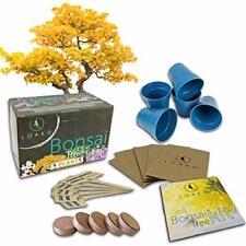 Bonsai Tree Starter Kit Grow 5 Bonsai Trees Beginner Friendly Complete New