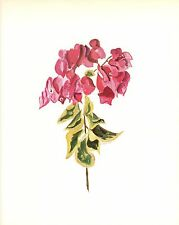 "CLARENCE E HALL 1966 Book Print  ""BOUGAINVILLEA"" Tropical Flower Oil Painting"