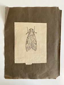 Antique Pen & Ink Drawing, Moth, Dated 1824